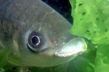 Primo piano di un pesce